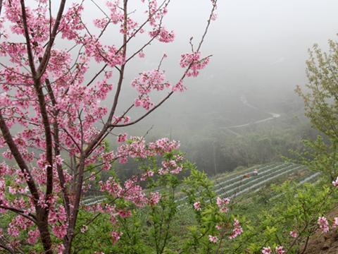 苗栗泰安‧石水坊高山草莓園